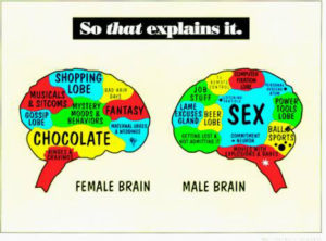 gender-brains